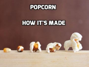 Popcorn : From farm to shelf