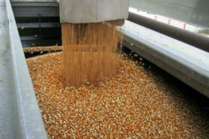 How Is Popcorn Made