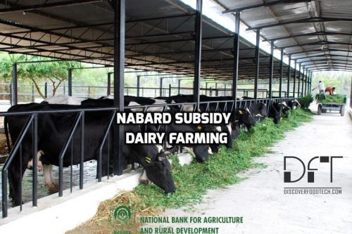 NABARD Subsidy For Dairy Farming - Eligibility, Terms And