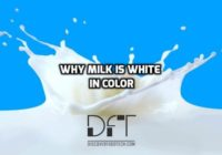 Why Is Milk White