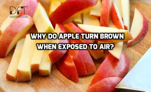 why do apples turn brown