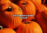 Why Pumpkin Is Orange In Color